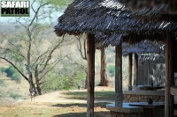 Tarangire Safari Lodge. (Tarangire National Park, Tanzania)