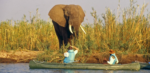 Kanotsafari och elefant i Lower Zambezi.